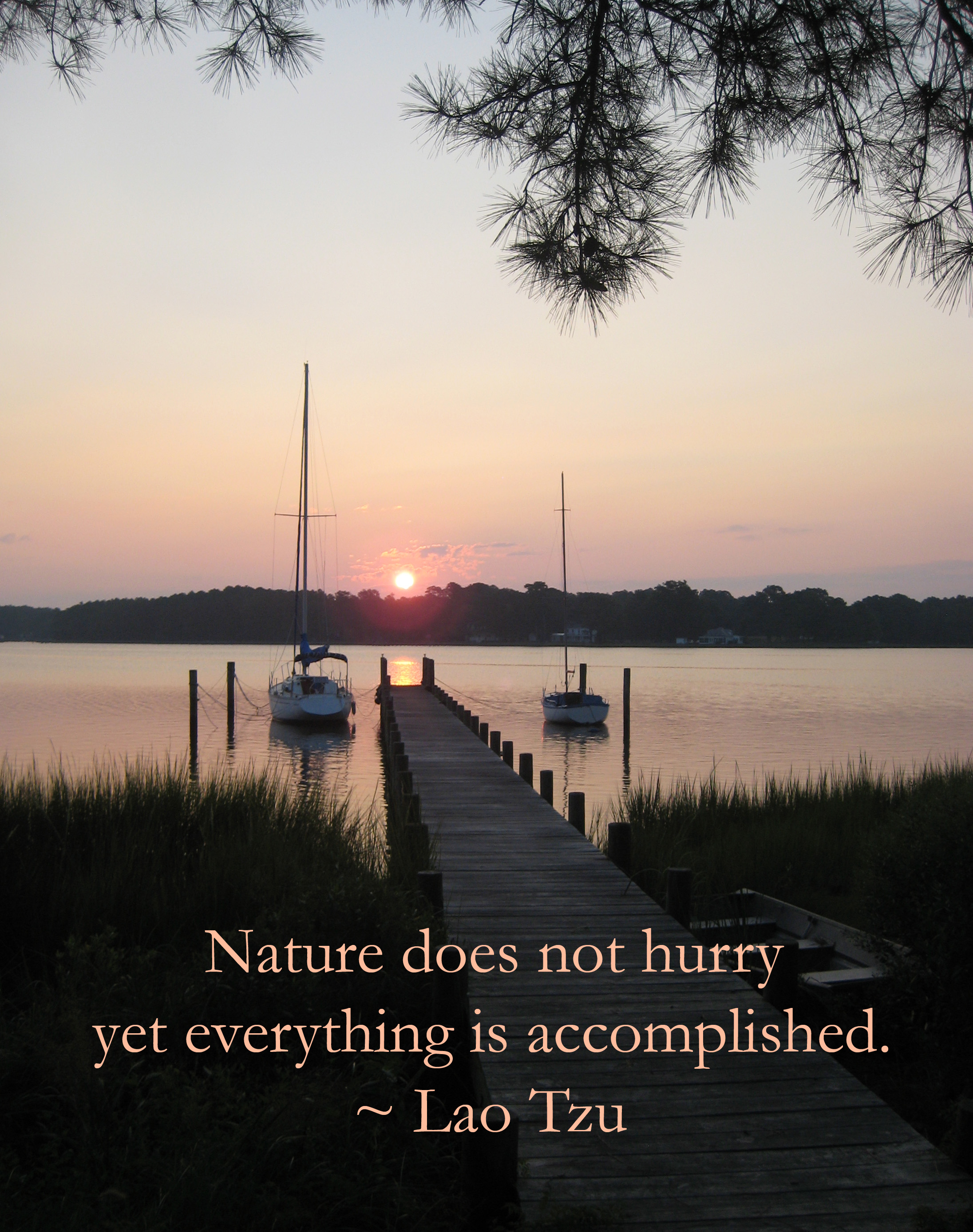Quotes Nature Carol Chapman Inspirational Quote About Nature From Lao Tzu