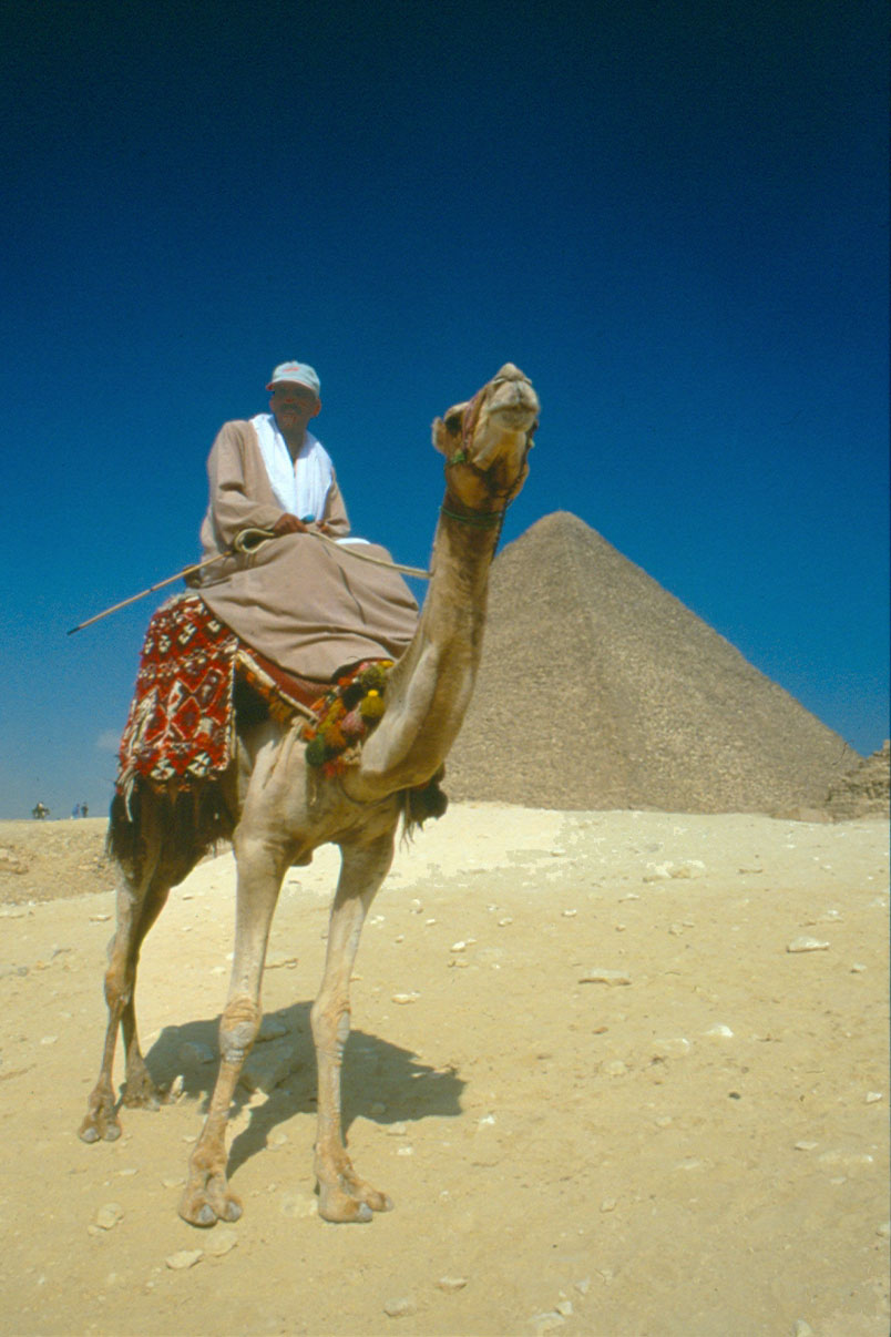 Camel and Great Pyramid