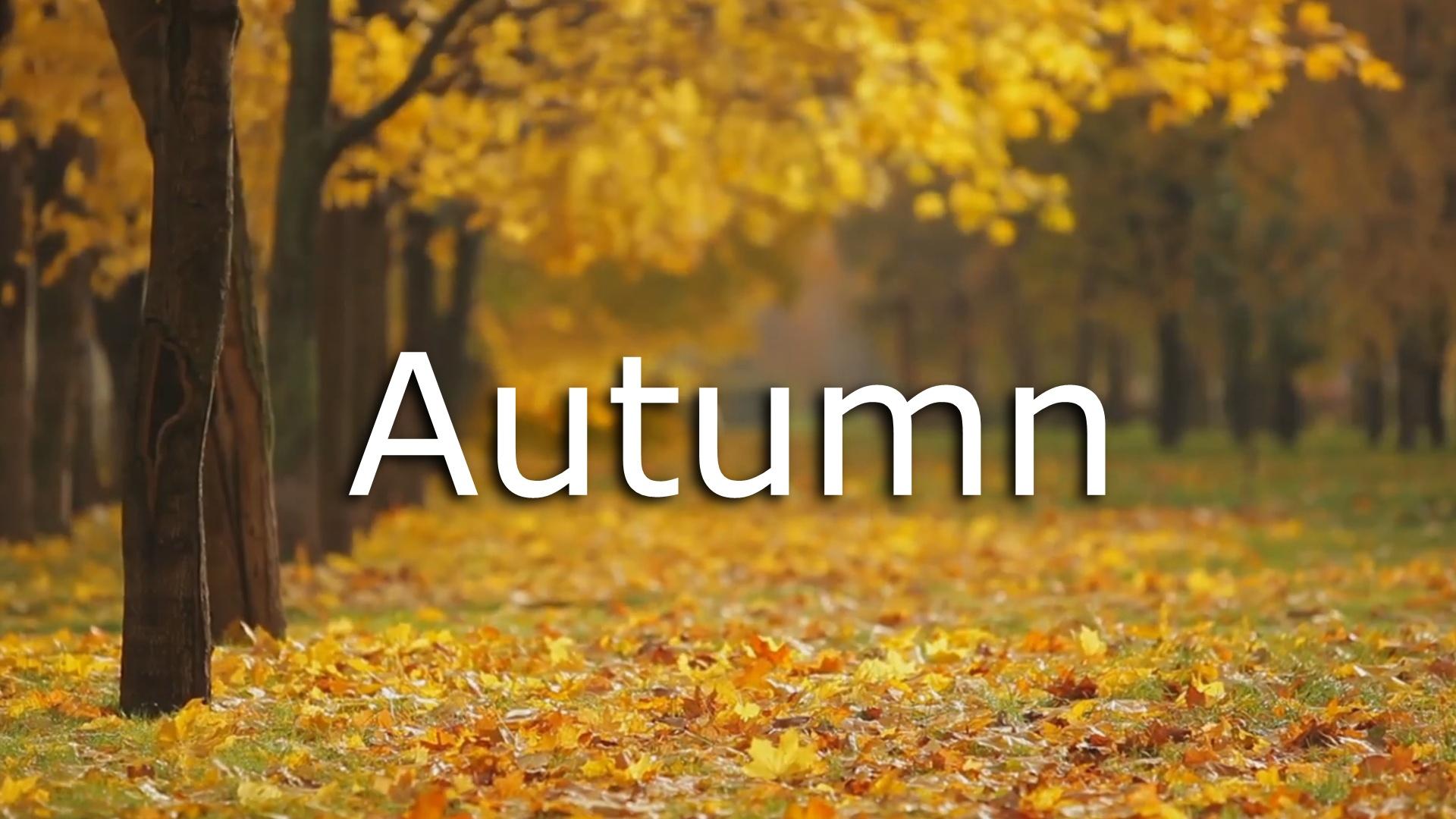 Autumn Nature Short Video