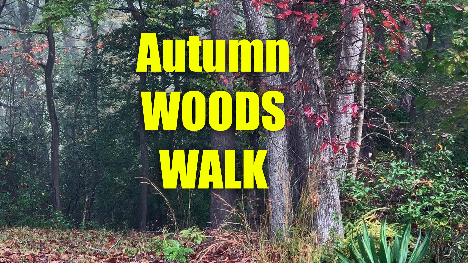 walking in the woods in autumn