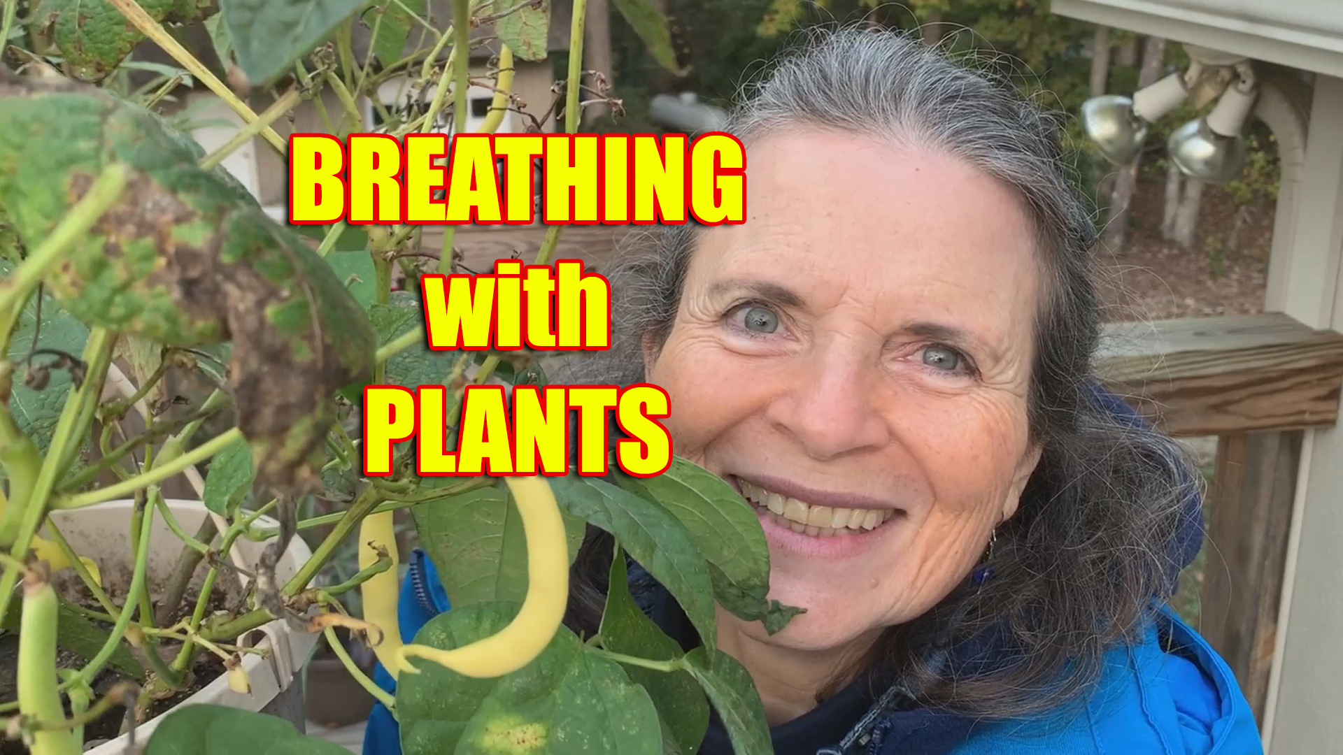 We breathe in what green plants breathe out