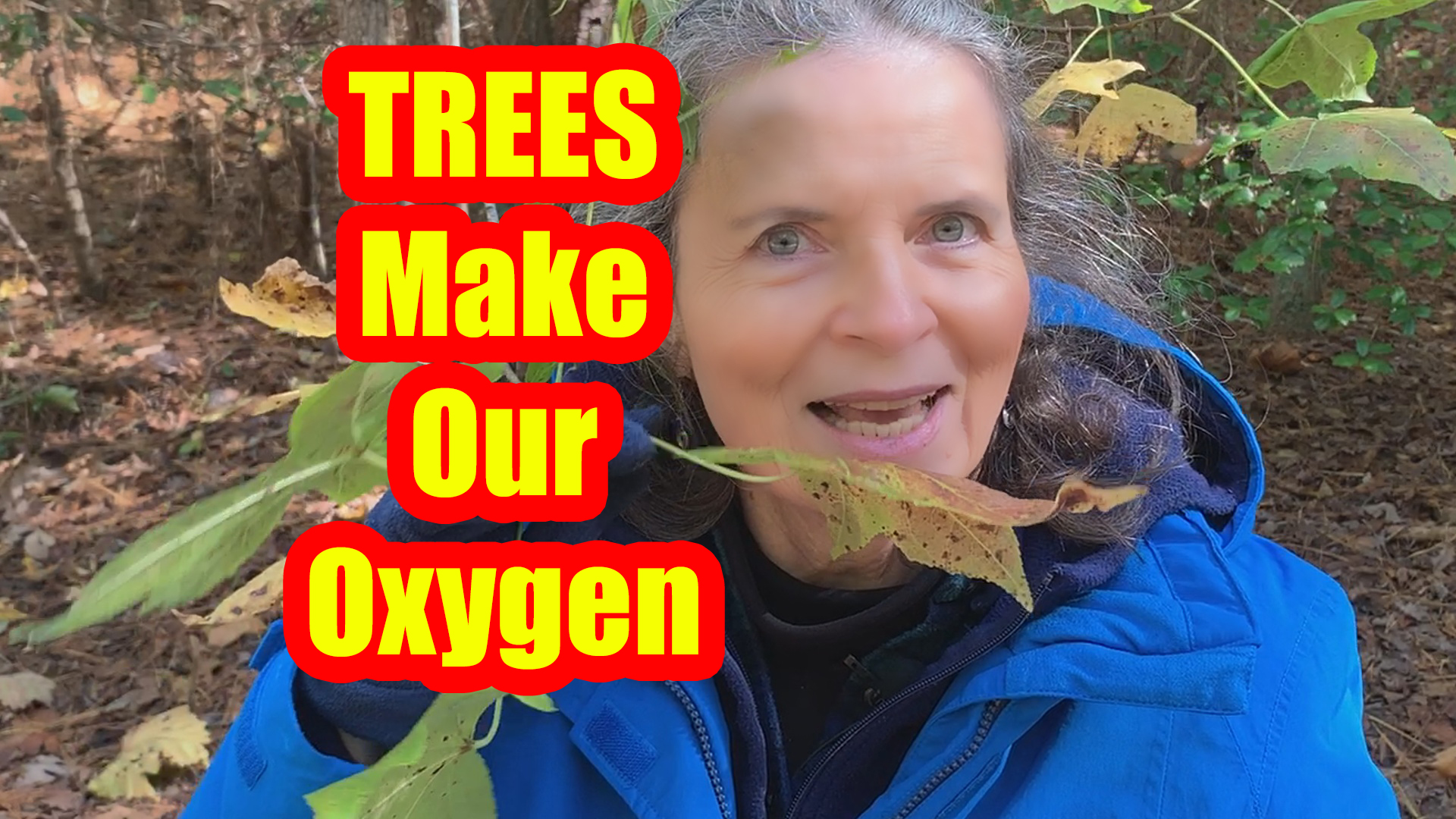 We Need Oxygen Made by Trees